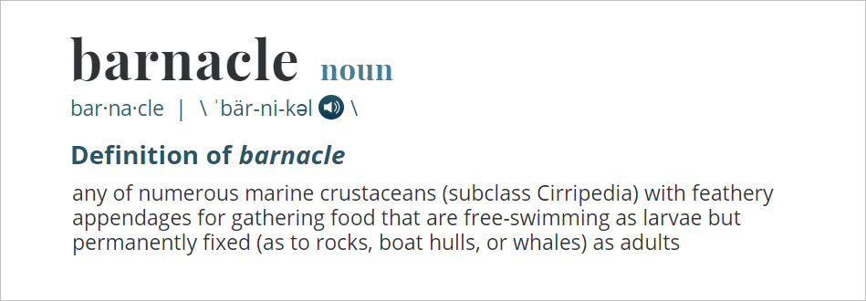 barnacle definition